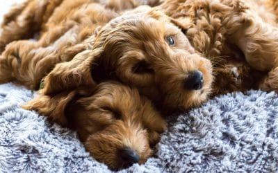 New Names & Adventures for Our Therapy Puppies
